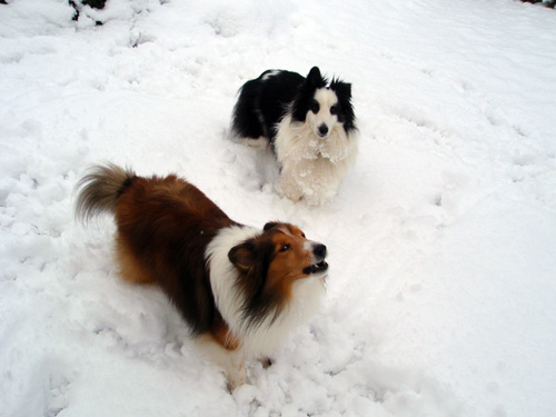 Two snow dogs